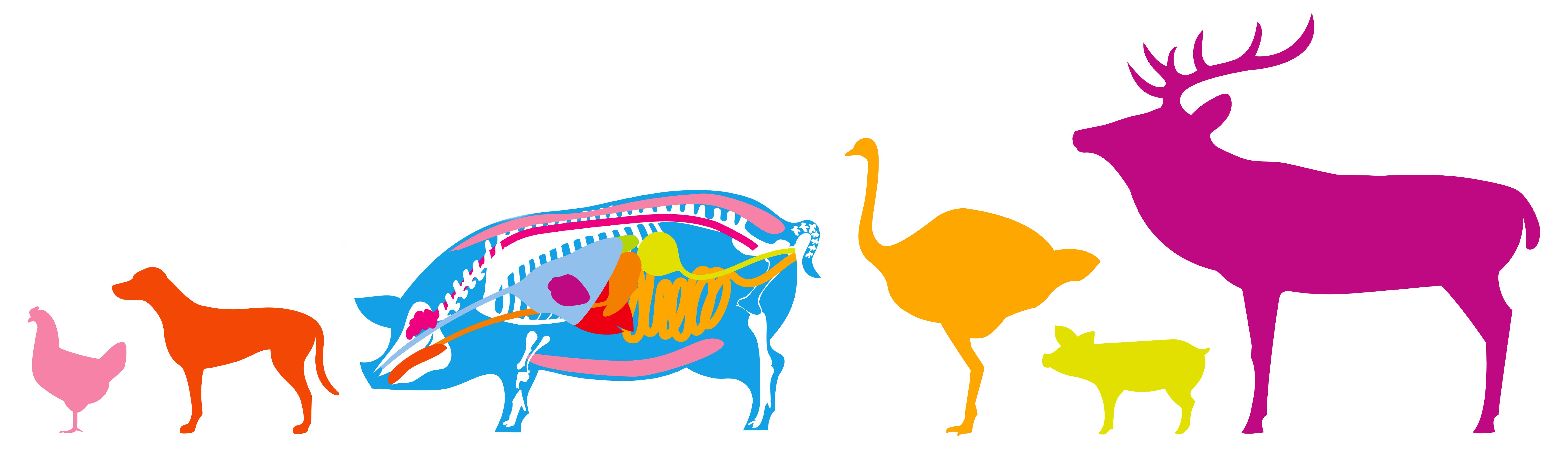 Tiere Fleisch & Ich